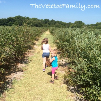 National Blueberry Month 2015