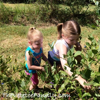 National Blueberry Month 2015 Blueberry Hills Farms