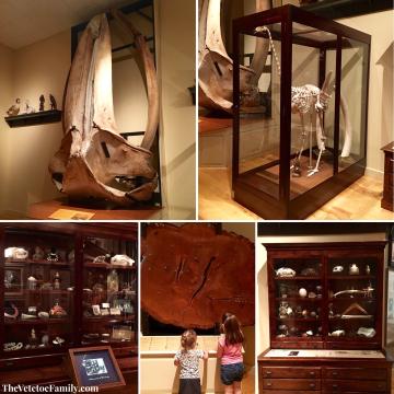 Mayborn Natural History Museum