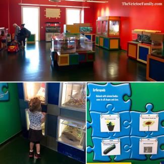 Mayborn Museum Vertebrates & Invertebrates